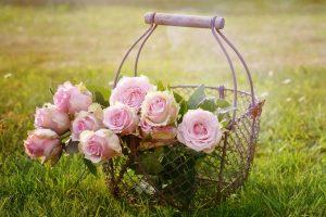 roses, blossom, bloom